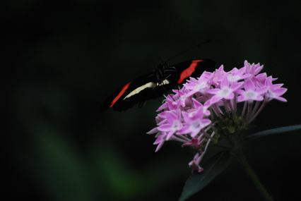 Red and white Moth