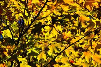 KH Fall Foliage 1