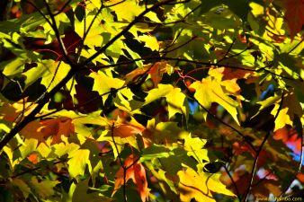 KH Fall Foliage 2