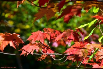 KH Fall Foliage 3
