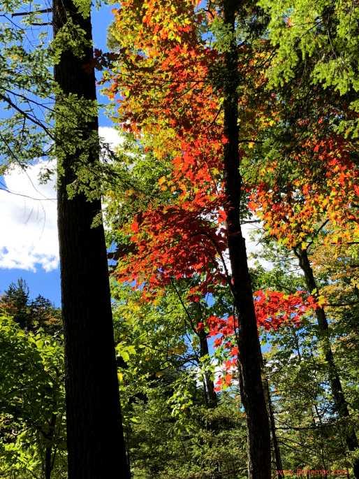 KH Fall Foliage 4