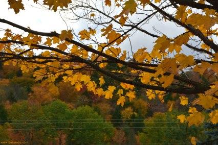 Leaves at peak color