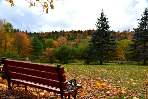 Relaxation with Fall Foliage